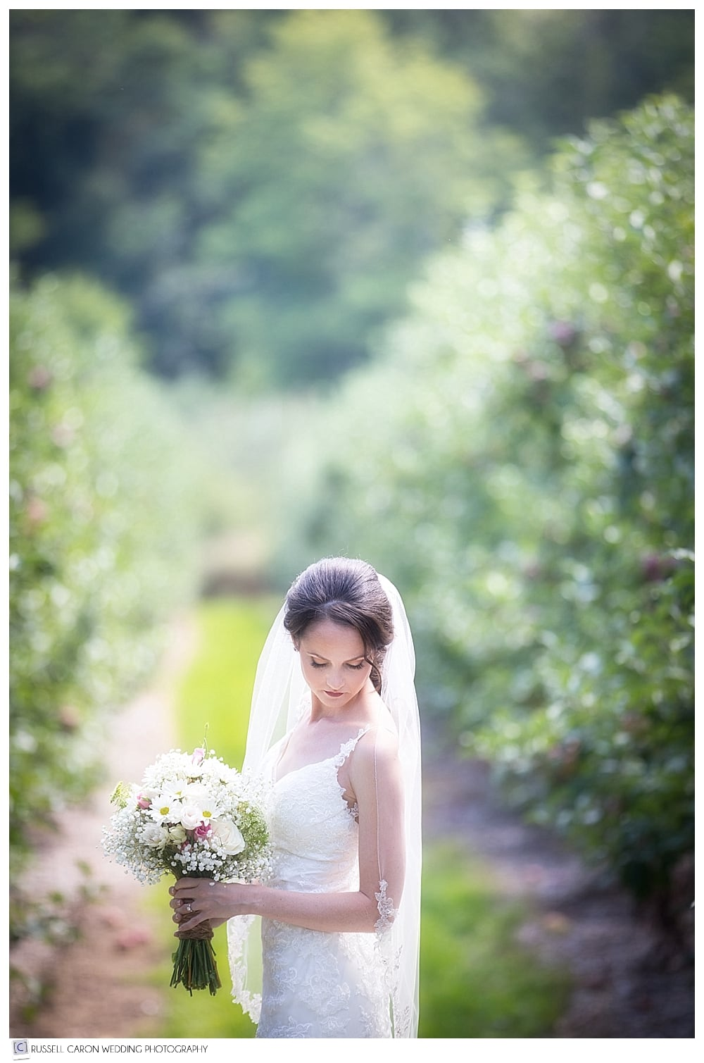 bride in Parlee Farms apple orchard
