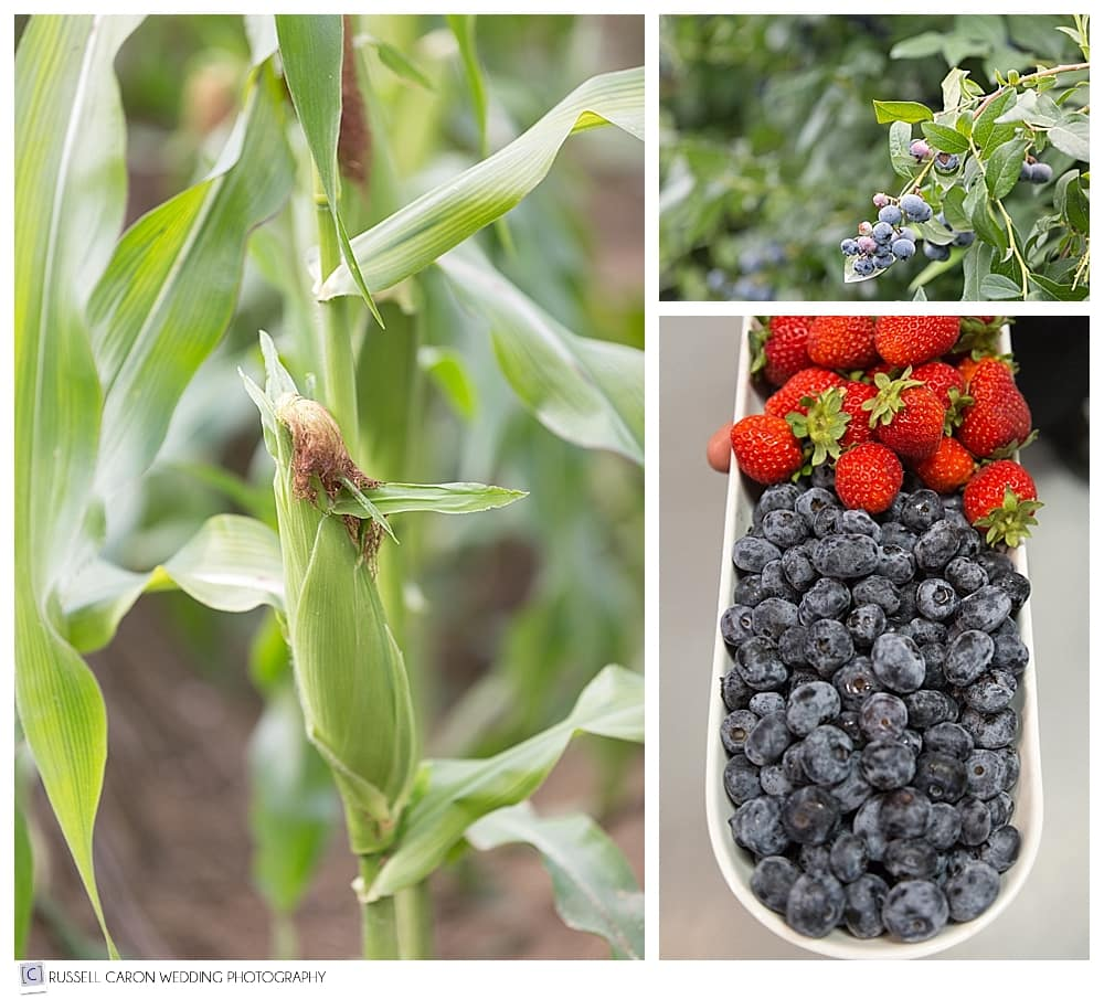 blueberries and corn at Parlee Farms