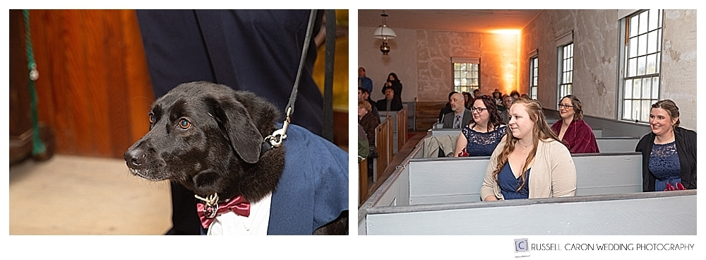 dog ring bearer, and bridesmaids during wedding ceremony
