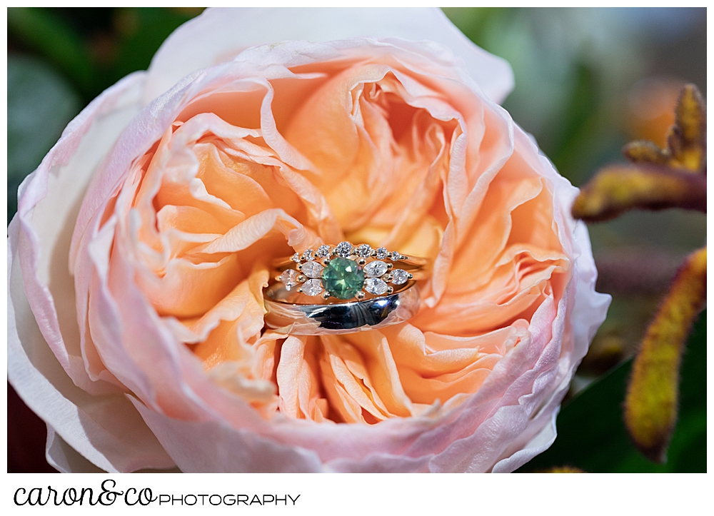 wedding rings in a peach colored ranunculus