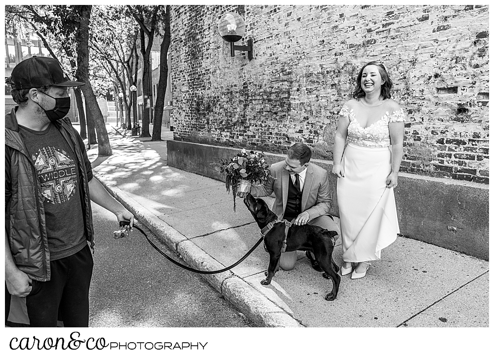 black and white photo of a man walking a dog, and a bride and groom petting the dog