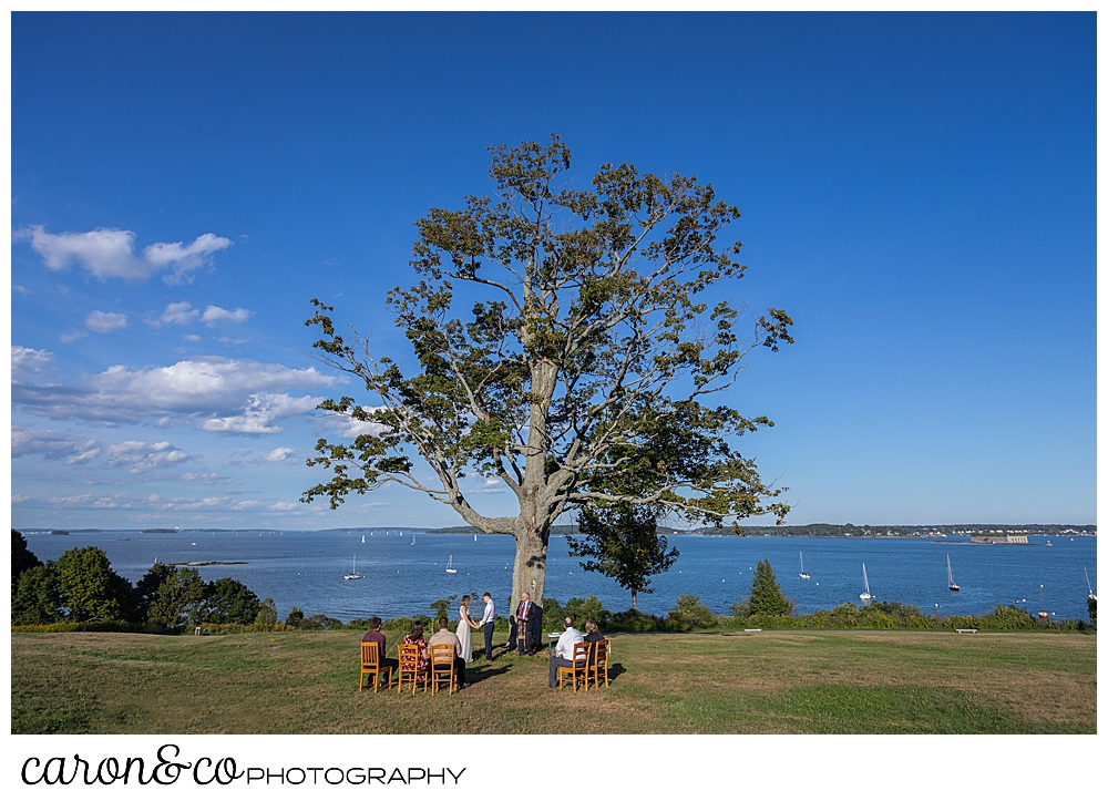 sweet Portland Maine elopement on the Eastern Promenade by the big tree