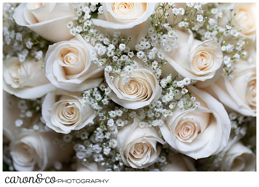 cream rose bridal bouquet with babies breath